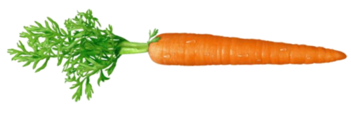21 weeks carrot